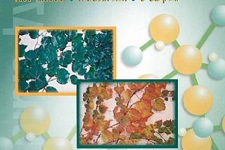 גיליון 8, 2005